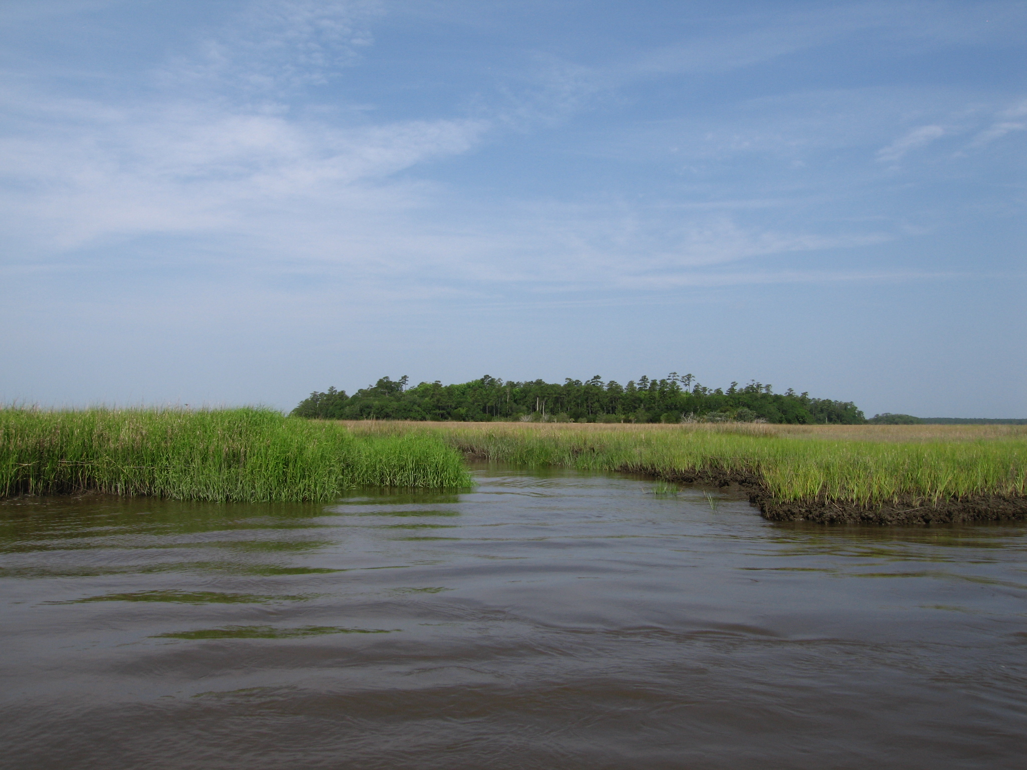 maritime forest and coastal hammocks     georgia land trust plum creek announce 5285 acre conservation      rh   algalandtrust wordpress