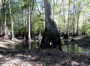Wetland in Laurens Co, GA